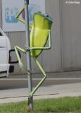 1138-balranald-frog.jpg