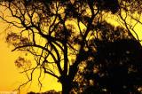 1149b-balranald-sunset.jpg
