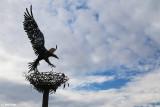 5534-balranald-sculpture.jpg
