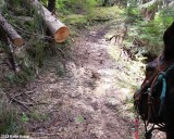 More logs cleared