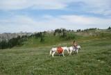 Daniella McCammon - Snowgrass Flat.JPG