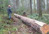Dec 27, 2013  Clearing Trail