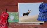 Wildlife Photo Winners