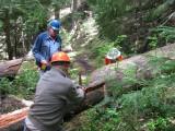 18 - Crosscut sawing.JPG