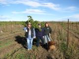 16 - Volunteers in the grapes.JPG