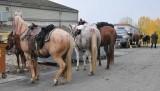 HorsesAtSilverLake-WineryHost.jpg