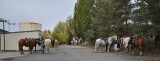SilverLake-Horses Hitched in back.jpg