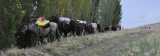 SilverLake-Horses hitched along the canal.jpg