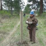 #17 - Haning Wire.JPG