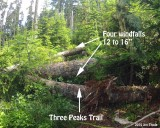 Four log group