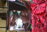 Peoples Choice Photo  2nd:  Dar Brady-Stella the Mule-Through the Looking Glass