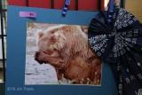 Wildlife 1st:  Becky Siebel-Grizzly-Alaska