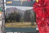 Camp Life 2nd: Susie Drugas-Conrad Meadows-White Pas