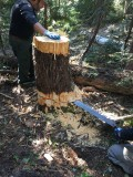 31 - Cutting Stump.jpg