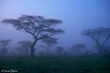 _1000639pb NDUTU TANZANIA