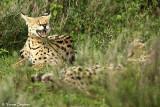 _48D0307pb.jpg SERVAL NDUTU TANZANIA