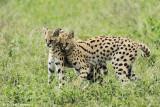 _48D0361pb SERVAL NDUTU TANZANIA