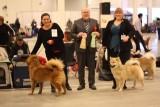 Hound Dog  26/1-14_n.jpg
