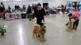 Hound Dog Exporama 26/1-14_n.jpg