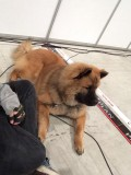 Hound Dog 9/2-14 Exporama Norge_n.jpg