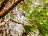 P3291552a-Bird.jpg