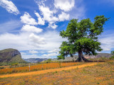 P3291828a-Holy-Tree.jpg