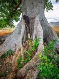 P3291833a-Holy-tree.jpg