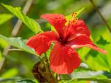 P3292085a-Botanical.jpg