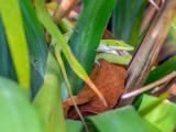 P3292103a-Lizard.jpg