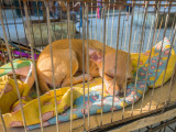 P3260899a-Puppy.jpg