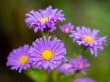 PA230649-Flowers.jpg
