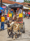 P3280290a-Goat-Cart.jpg