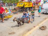 P3280435a-Goat-Cart.jpg