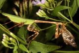 Butterfly Predators