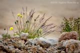 Petite flore du Grand Nord