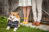 My humans are getting married !