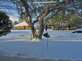 snow on my birthday2074-1024.jpg