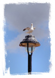 Gull On Lamp II