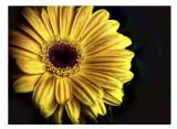 todays yellow