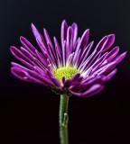 feb 5 violette