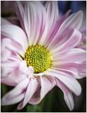 feb 5 pink