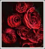 Anthony roses