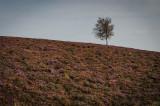 Live Moor