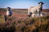 High Blakey Moor