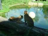 London and Whipsnade Zoos