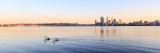 Pelicans on the Swan River at Sunrise, 20th August 2013