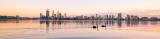 Black Swans on the Swan River at Sunrise, 13th April 2014