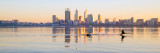 Black Swans on the Swan River at Sunrise, 23rd June 2014