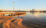 Black Swans by the Swan River at Sunrise, 24th June 2014