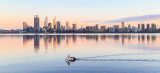 Pelican on the the Swan River at Sunrise, 13th September 2014